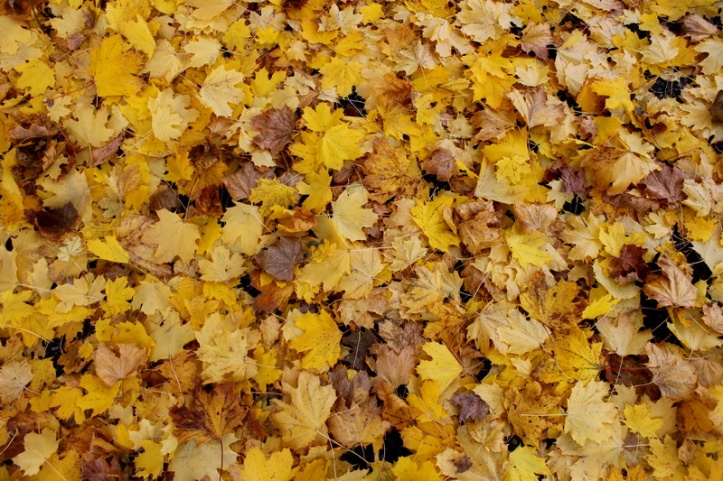 Leaves on the ground_resize