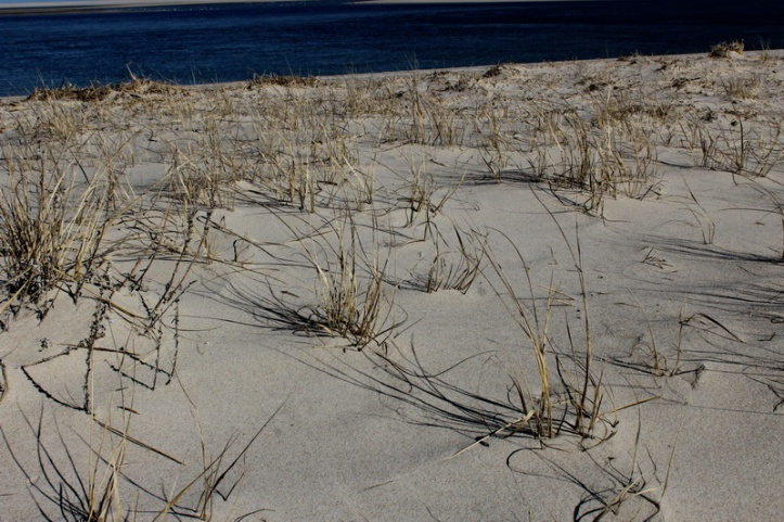 seagrass 2_resize