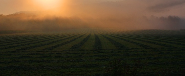 foggy fields 2