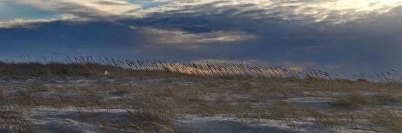 sea-grass