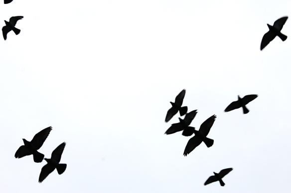 birds-reimagined