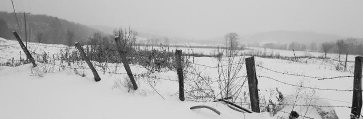 WPawlet in snow.jpg