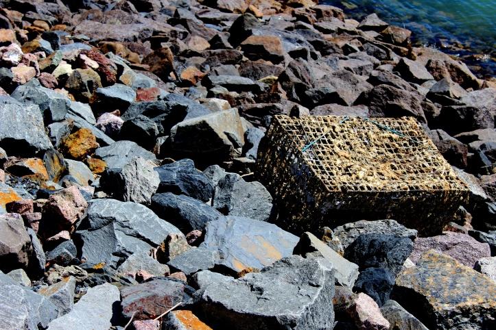 lobster trap.JPG
