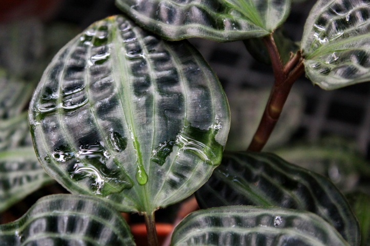 water on leaves_resize