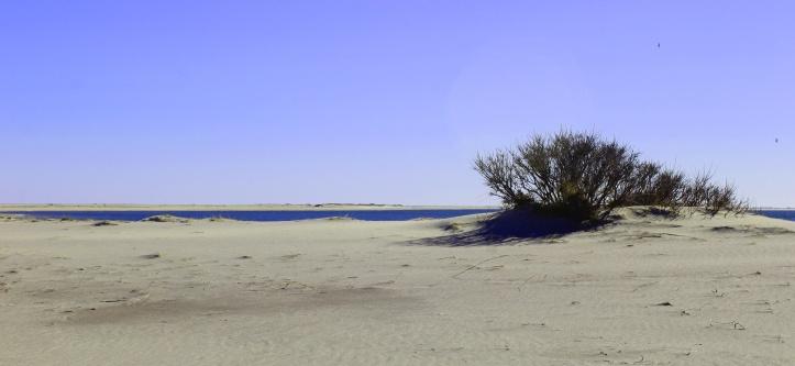 beach bush.JPG