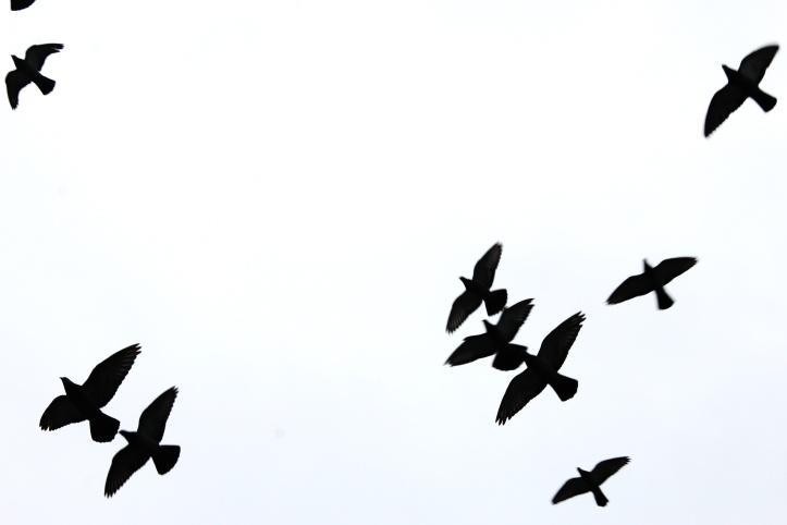 birds reimagined