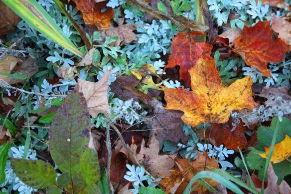 garden in fall resized