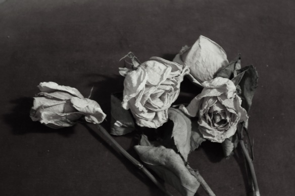dead flowers 2