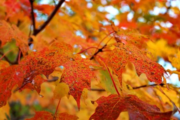 leaves 3.JPG