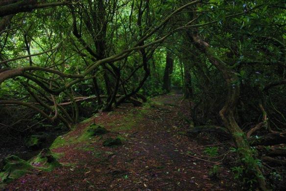 Cornwall Marsh_resize