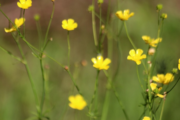 yello wildflowers