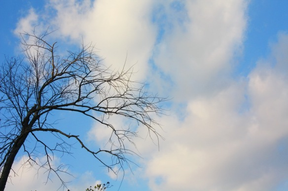 trees_resize