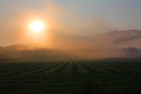 foggy fields_resize.JPG