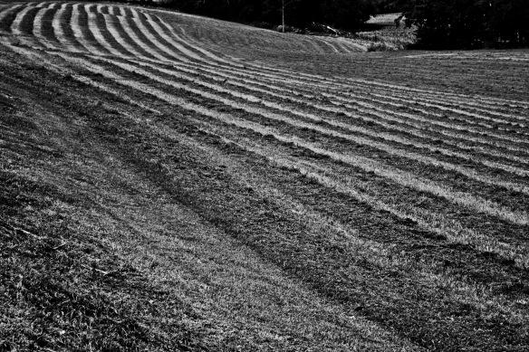Rows.JPG