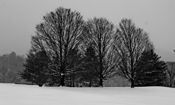 three trees_resize
