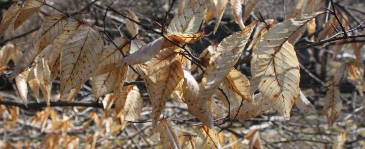West Pawlet leaves.jpg