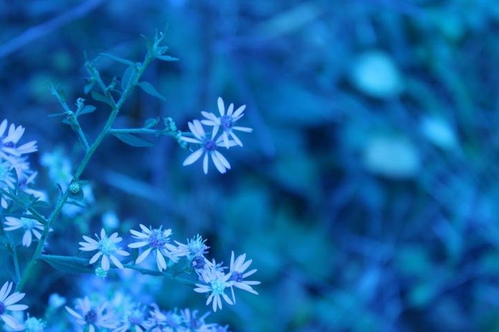 blue_resize