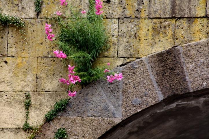 Flowers in Pompei_resize.JPG