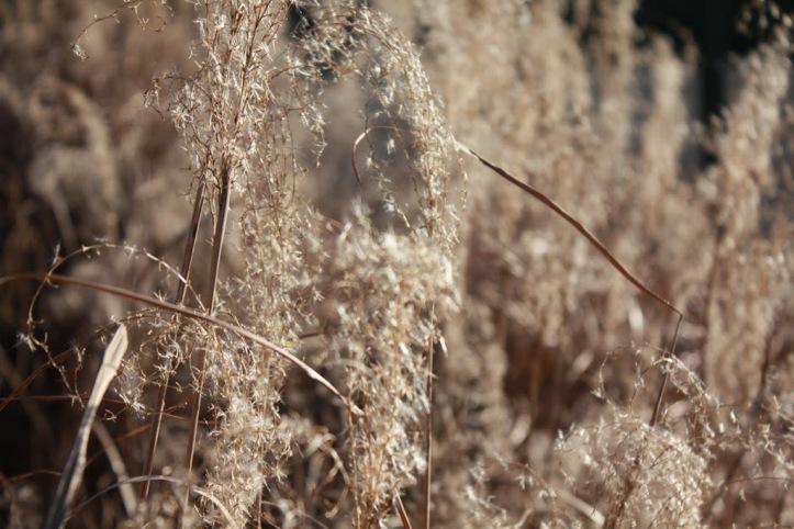 weeds_resize.JPG