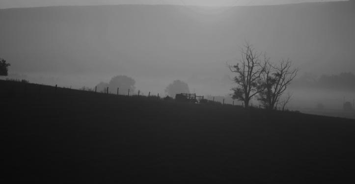 yellow fog bw