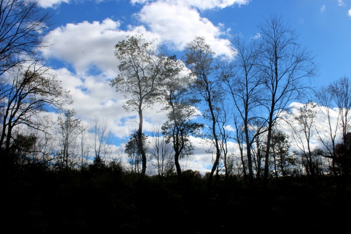 Sky beyond the Trees_resize