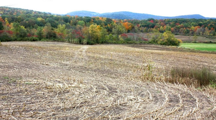 fall fields_resize.JPG