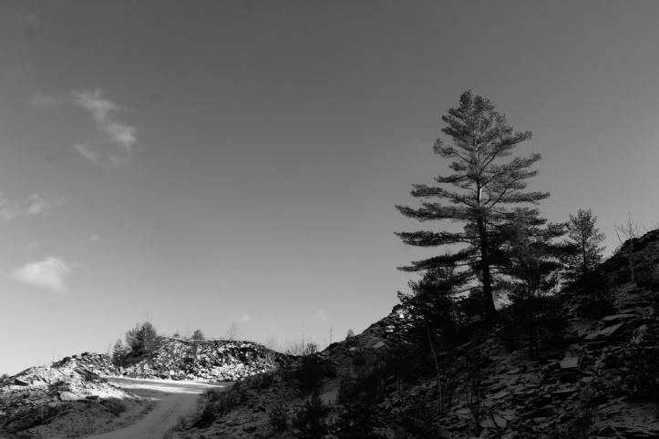 quarry tree_resize